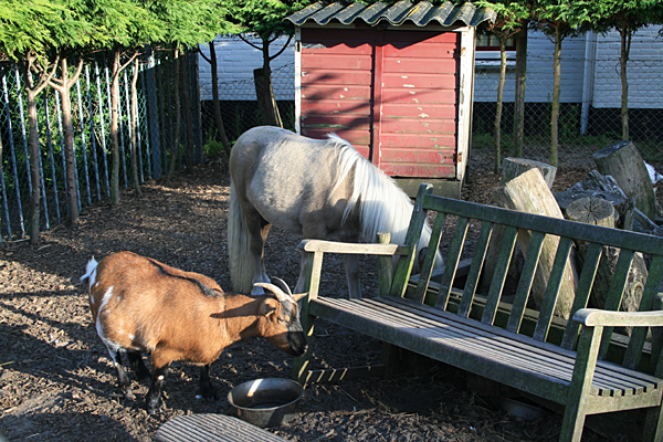 Camping De Meerpaal -Campingzoo mit Ziege Toos-